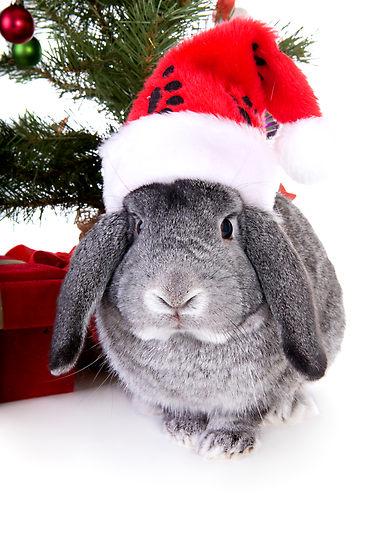 Картинка кролик в новый год